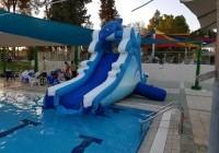 מגלשת דולפין לבריכה